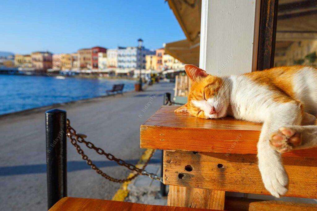 Hanya Limanında Uyuyan Kedi, Girit