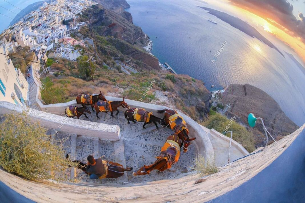 Donkeys against colorful sunset on Santorini island in Greece