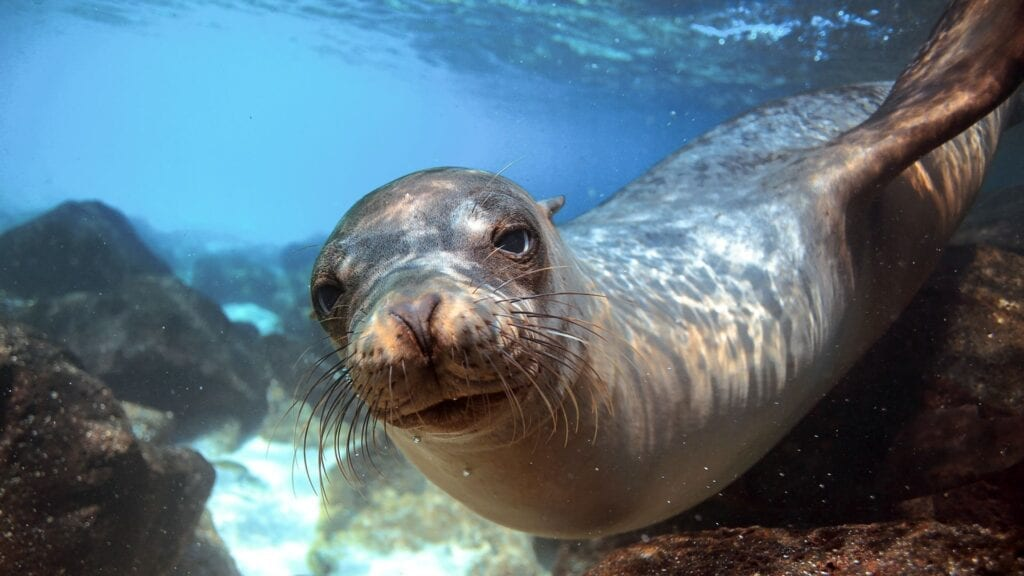 Alonissos: Home of the Mediterranean monk seal.